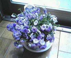 flower06a.jpg