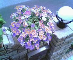 flower08a.jpg