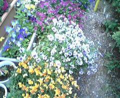 flower09a.jpg