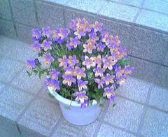 flower10a.jpg