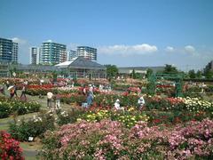 rosepark01a.JPG